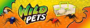 Araignées Wild pet