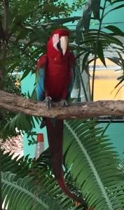 perroquet jungle island